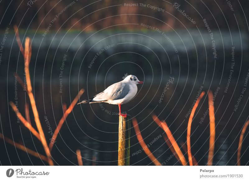 Seagull on a wooden post by the water Sky Nature Vacation & Travel Man Beautiful White Ocean Animal Adults Natural Wood Bird Wild Body Sit Feather