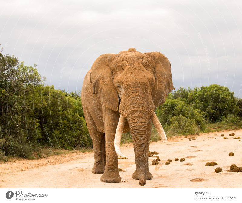 Careful!!! Adventure Safari Expedition Environment Nature Landscape Elements Earth Sand Sky Clouds Spring Autumn Warmth Plant Tree Bushes South Africa Animal