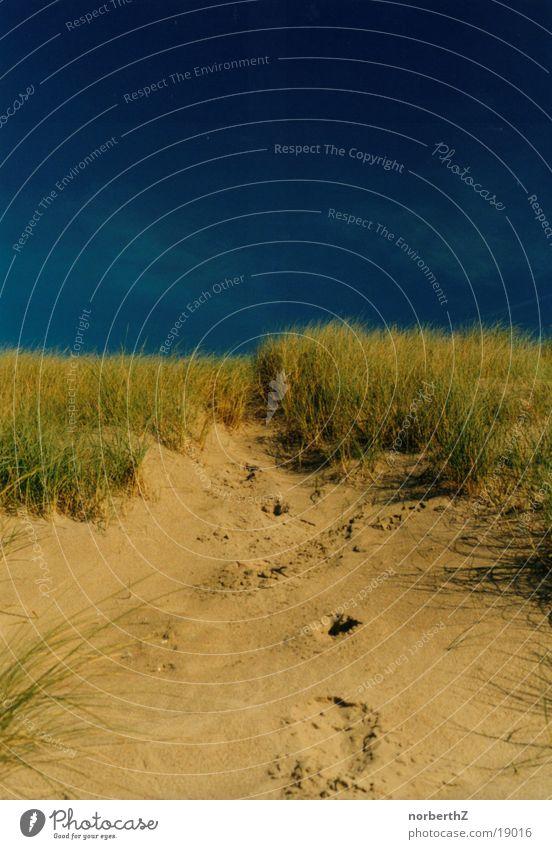Sky Blue Beach Grass Sand Beach dune Netherlands