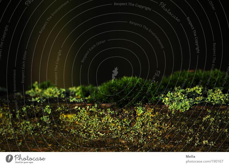 Nature Green Plant Calm Dark Environment Growth Near Natural Moss Mushroom Lichen