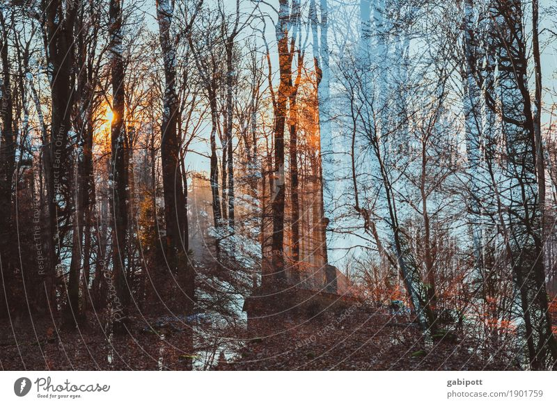 Forest wash with tower Nature Landscape Winter Weather Beautiful weather Crazy Blue Brown Moody Joie de vivre (Vitality) Stress Perturbed Double exposure Tower