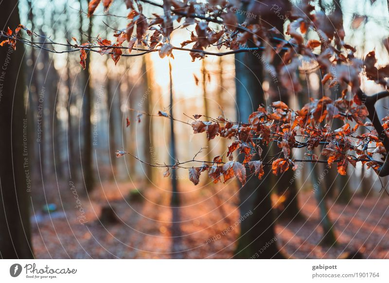 Enjoy the sun Nature Landscape Winter Weather Beautiful weather Ice Frost Plant Tree Leaf Forest Breathe Fragrance Relaxation Sunbeam Cold Palatinate forest