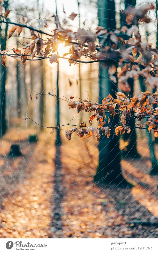 Palatinate Forest Environment Nature Landscape Plant Elements Earth Autumn Beautiful weather Tree Woodground Deciduous forest Deciduous tree Automn wood