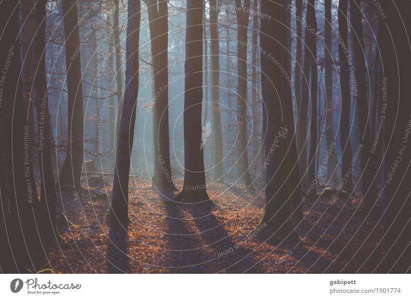 Light and shadow Trip Adventure Nature Landscape Plant Elements Air Autumn Winter Beautiful weather Tree Forest Breathe Life Contentment Calm Growth Forestry