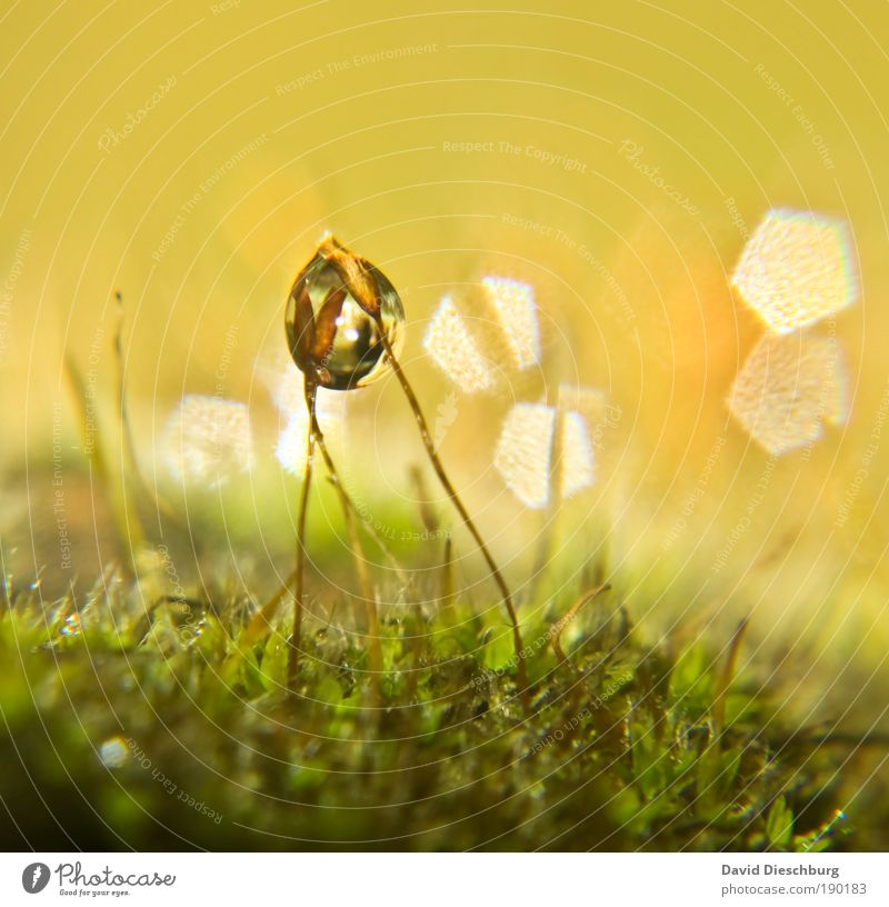Wet friendship Harmonious Nature Plant Water Drops of water Spring Summer Moss Yellow Gold Green Silver Blade of grass Carpet of moss Damp Dew Sphere