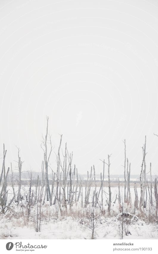 Nature Water White Tree Winter Calm Far-off places Cold Snow Death Landscape Environment Weather Ice Trip Fog