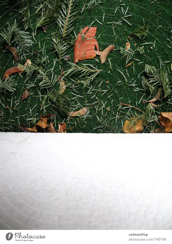 christmas leftovers with text space below Winter Balcony Gloomy Green White Pine needle Artificial lawn knut January Colour photo Exterior shot