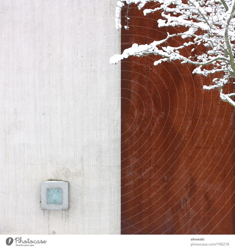 contrasts Environment Nature Plant Winter Snow Tree Branch Wall (barrier) Wall (building) Cold Rust Colour photo Exterior shot Pattern Structures and shapes