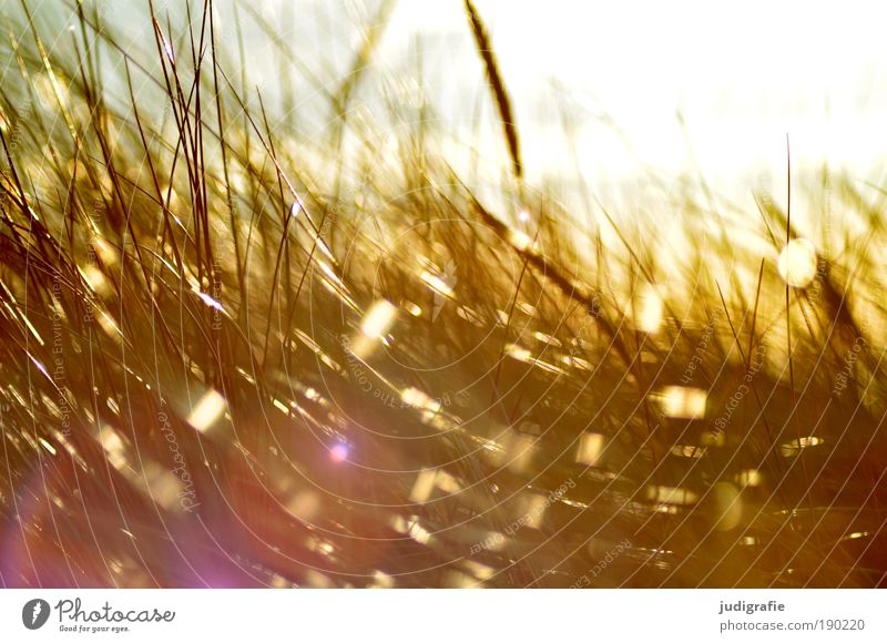 grass Environment Nature Plant Sun Sunlight Climate Wind Gale Grass Coast Beach Baltic Sea Movement Glittering Illuminate Growth Bright Idyll Moody Colour photo