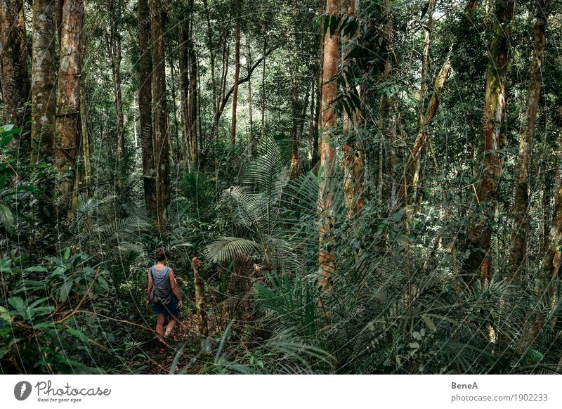 Human being Woman Vacation & Travel Plant Tree Far-off places Forest Adults Lanes & trails Feminine Tourism Going Hiking Bushes Adventure Footpath