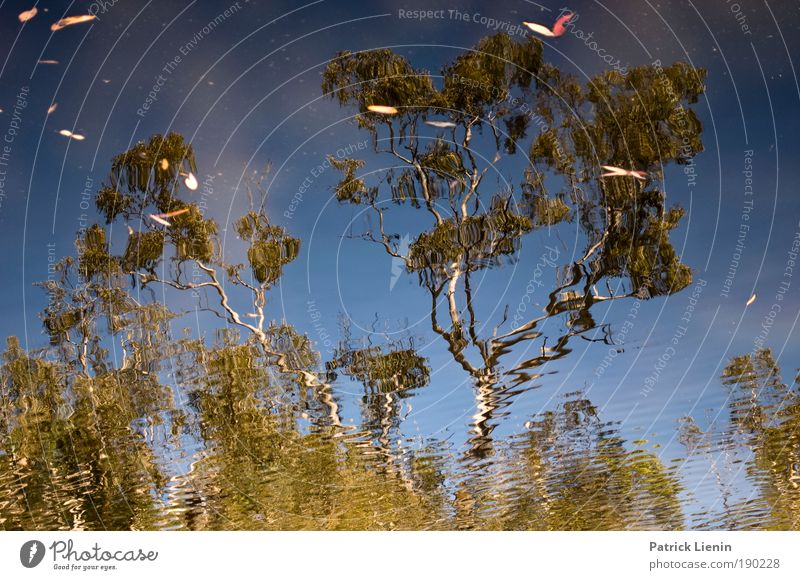 Sky Nature Water Green Tree Plant Summer Calm Environment Warmth Think Lake Australia Watering Hole Eucalyptus tree