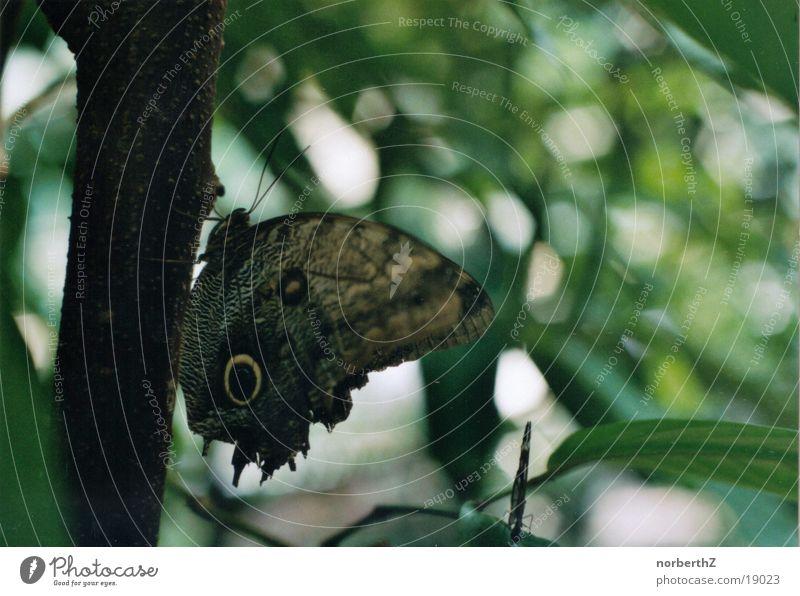 butterfly Butterfly Green Leaf Crawl Transport Eyes Tree trunk