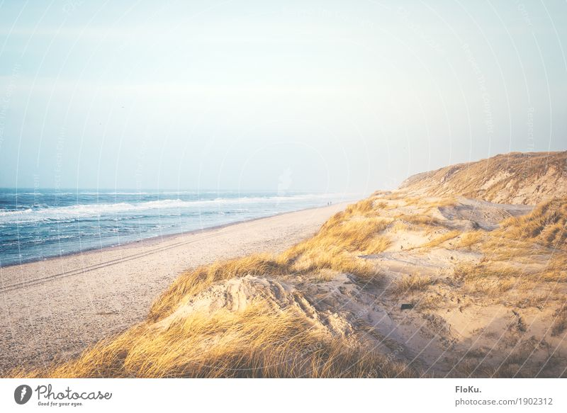Danish North Sea coast Vacation & Travel Tourism Far-off places Freedom Summer vacation Beach Ocean Waves Environment Nature Landscape Sand Water Sky Horizon