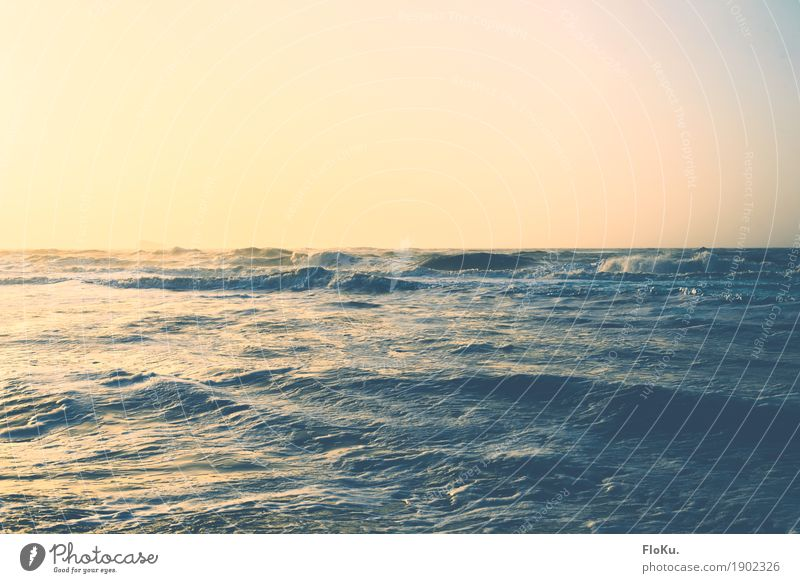 North Sea in gold Vacation & Travel Far-off places Freedom Summer vacation Ocean Waves Environment Nature Elements Water Sky Cloudless sky Horizon Sun Sunlight