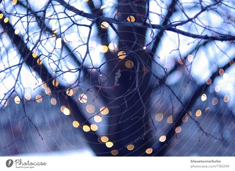 light chain Winter Plant Tree Cold Tree trunk Treetop Branch Twigs and branches Blur Fairy lights Light Evening Colour photo Exterior shot Deserted Twilight