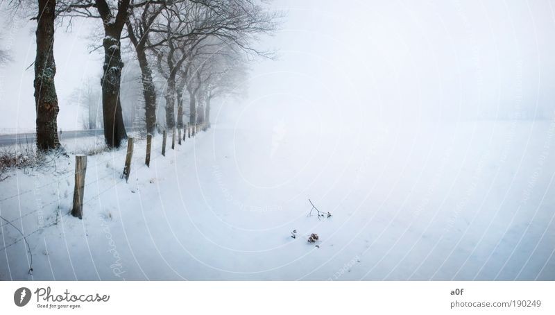 Nature Water Tree Plant Winter Calm Street Relaxation Environment Landscape Air Art Field Fog Skis Fence