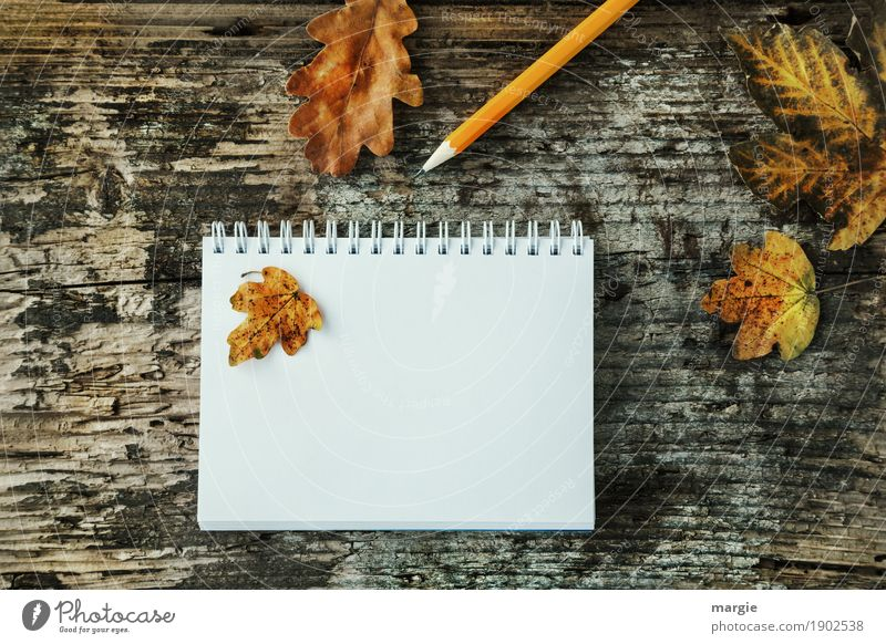 Autumn leaves and pencil on old wood with spiral writing pad Study Profession Office work Advertising Industry Business To talk Write Yellow White Pen Pencil