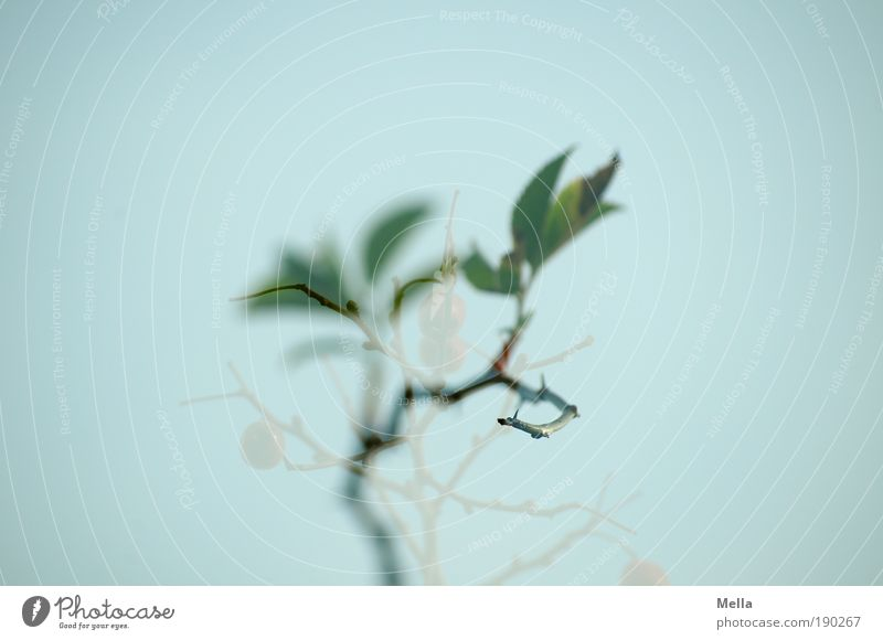 Nature Plant Leaf Dream Moody Environment Rose Growth Natural Exceptional Thorny Foliage plant Wild plant Dog rose