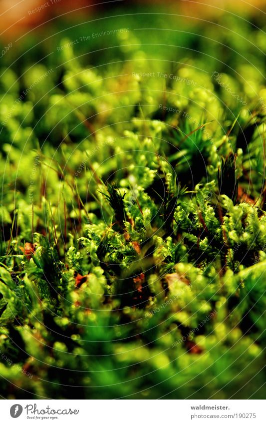 moss Nature Plant Moss Growth Natural Colour photo Exterior shot Detail Macro (Extreme close-up) Blur Shallow depth of field Worm's-eye view