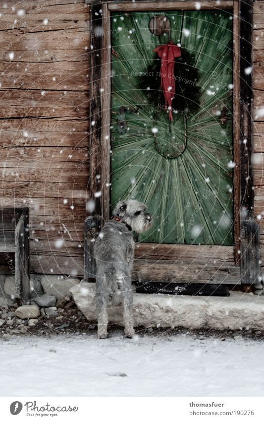 Winter House (Residential Structure) Animal Cold Snow Dog Snowfall Ice Wait Door Weather Hope Frost Climate Village Hut