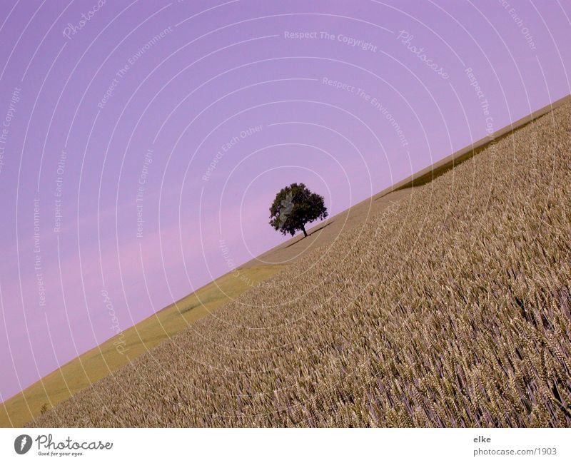 Sky Tree Plant Landscape Field