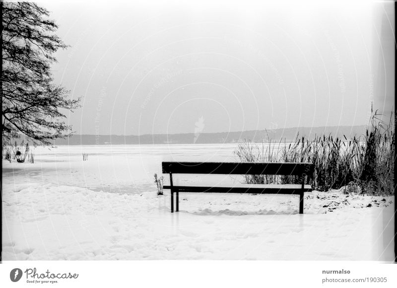 Place at the Wintergrey Trip Snow Hiking Art Nature Landscape Water Climate Ice Frost Common Reed pompel Coast Lakeside Municipality of Schwielowsee Bench