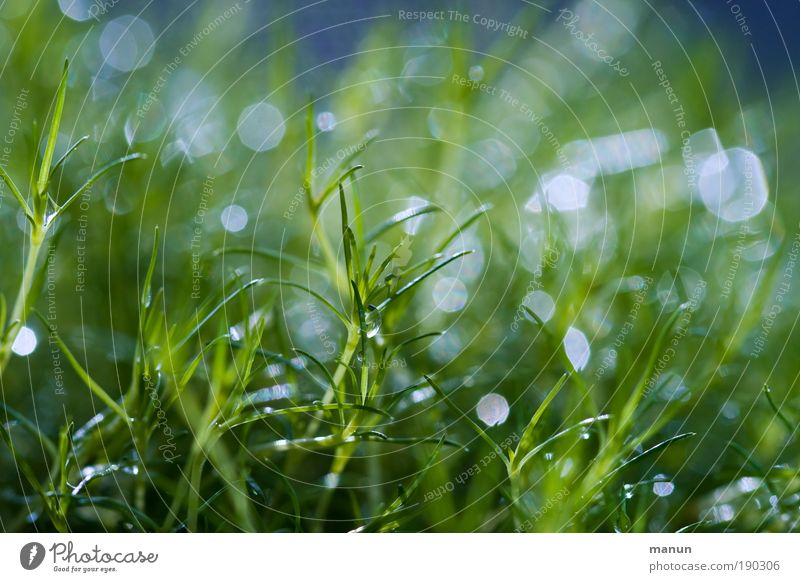 Nature Green Blue Plant Summer Meadow Grass Spring Park Macro (Extreme close-up) Glittering Drops of water Wet Fresh Happiness Pure