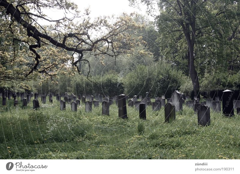 last rest Grave Calm Sadness Death Grief Time Rest Eternity Tomb Tombstone Timeless Colour photo Exterior shot Deserted Day
