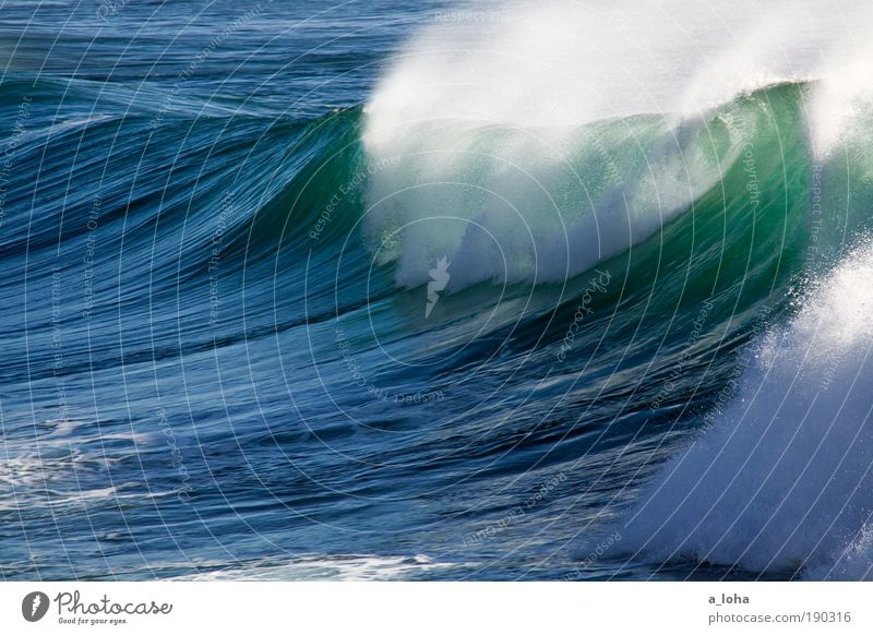 The Wave Nature Elements Water Beautiful weather Waves Coast Ocean Drop Movement Fluid Gigantic Large Wet Blue Green Power Longing Wanderlust Dangerous Chaos