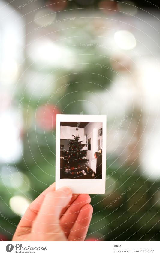 Christmas tree Christmas & Advent Hand Photography Polaroid Picture-in-picture To hold on Old Emotions Moody Anticipation Nostalgia Memory Christmas mood