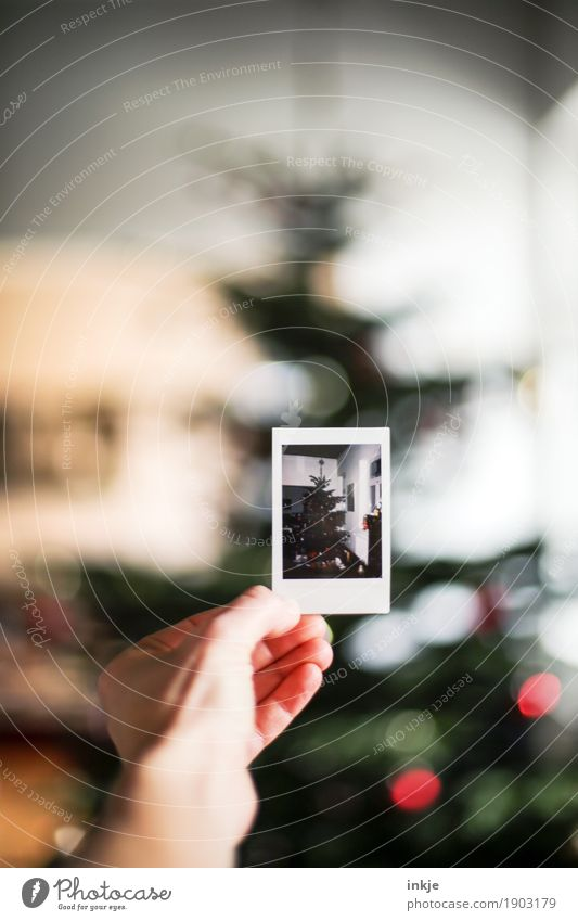 Christmas & Advent Hand Emotions Moody To hold on Christmas tree Anticipation Memory Nostalgia Christmas decoration Picture-in-picture