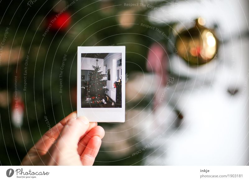 Back then. Christmas. Lifestyle Living or residing Christmas & Advent Hand Christmas decoration Christmas tree Polaroid Picture-in-picture To hold on Equal