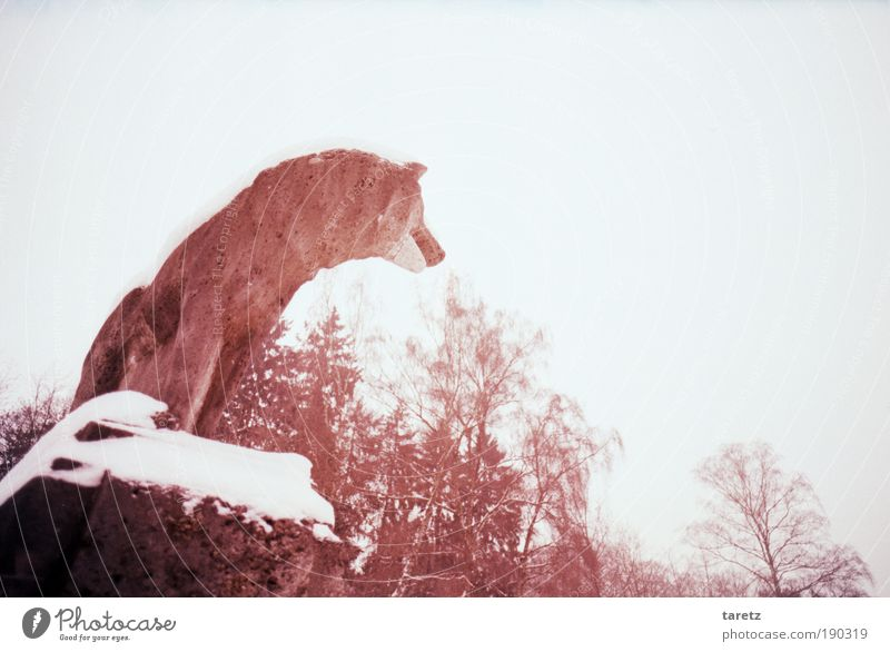 Tree Red Winter Loneliness Animal Cold Snow Stone Wait Search Vantage point 1 Longing Statue Still Life Watchfulness
