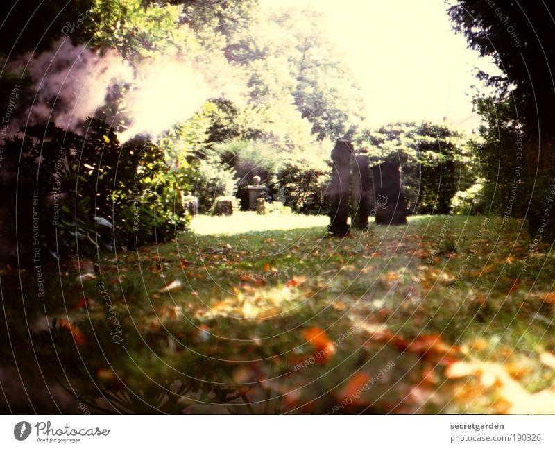 Sky Nature Old Green Tree Dark Sadness Autumn Emotions Grass Death Garden Brown Park Fear Gold