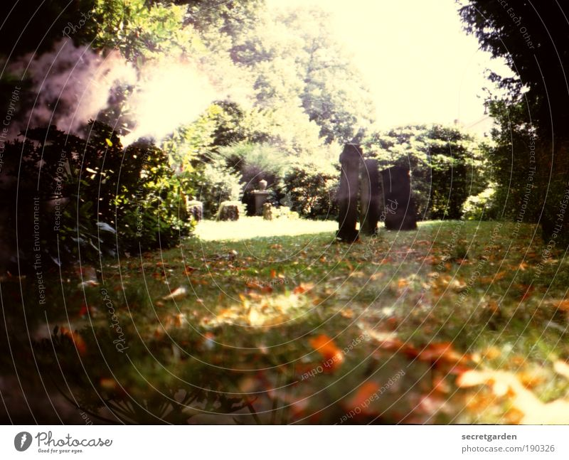 The body is the expression of the soul. Funeral service Retirement Nature Sky Autumn Beautiful weather Tree Grass Bushes Garden Park Old Faded Dark Brown Gold