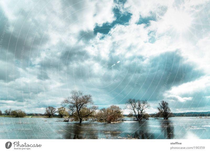 Tree Winter Clouds Autumn Dream Lake Brandenburg Landscape Nature River Observe Beautiful weather Oder Flood Mud flats Deluge
