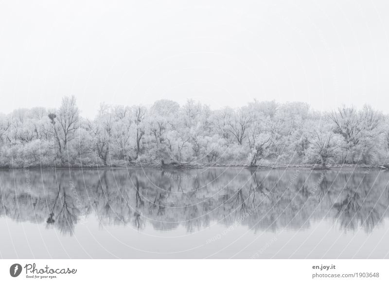 trails of fog Environment Nature Landscape Sky Winter Ice Frost Snow Snowfall Tree Forest Lakeside Cold White Sadness Grief Idyll Religion and faith Calm