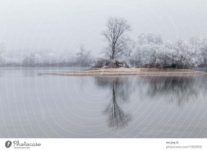 Desert Island Environment Nature Landscape Plant Sky Winter Ice Frost Snow Tree Lakeside Cold White Sadness Grief Longing Calm Dream Reflection Colour photo