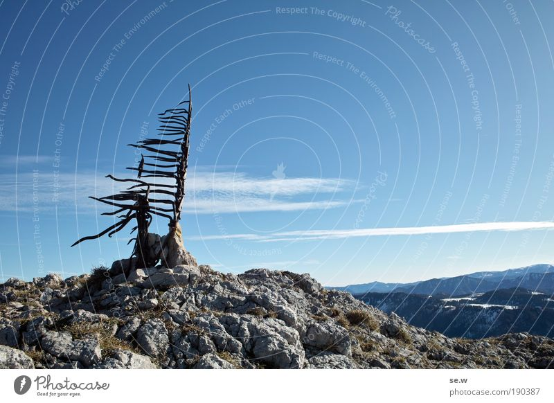 Above all peaks Tourism Mountain Cloudless sky Autumn Tree Alps Relaxation Growth Infinity Uniqueness Blue Gray Joy Contentment Power Calm Loneliness Eternity