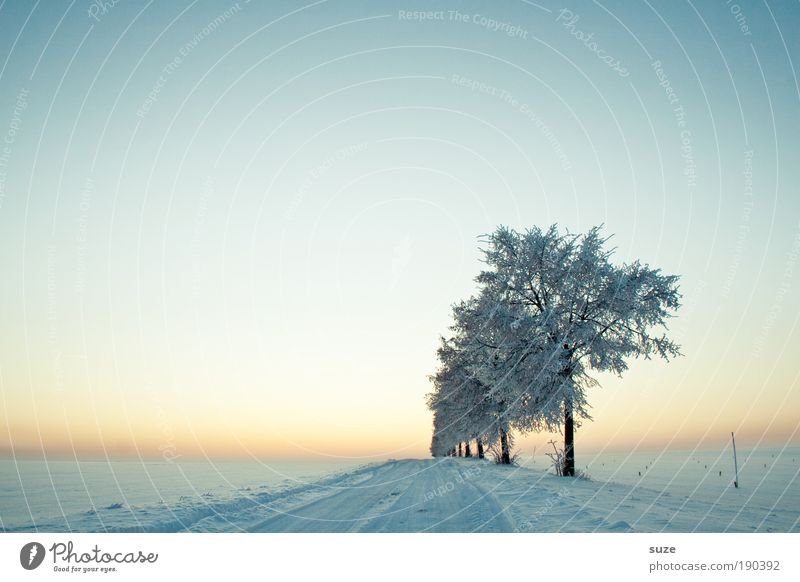 Sky Nature Tree Loneliness Winter Landscape Environment Cold Snow Lanes & trails Bright Air Horizon Dream Moody Natural