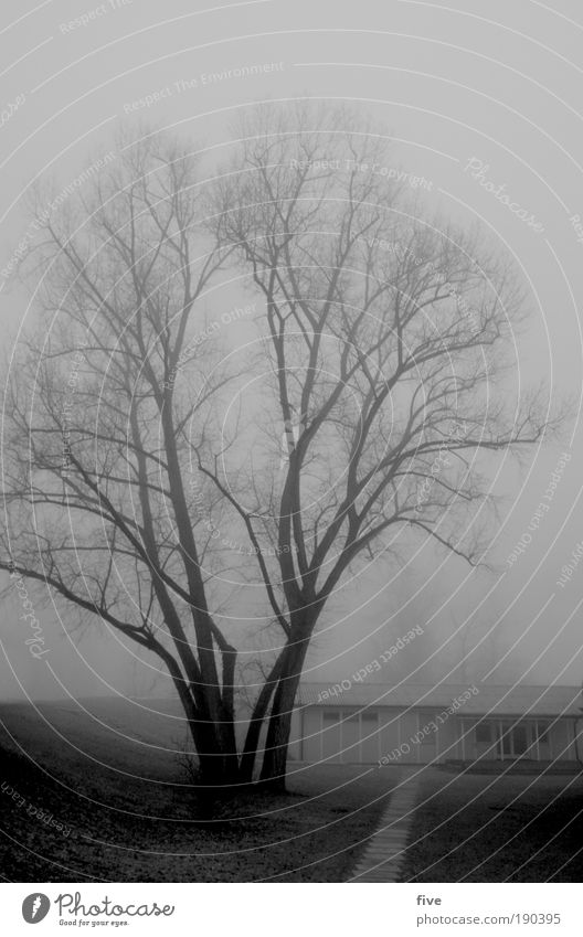 he's awake. Nature Tree Meadow Dark Simple Free Cold Wet Black Moody Sadness Fatigue Building Winter Black & white photo Exterior shot Morning