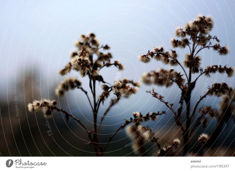 Nature Plant Grass Brown Field Gloomy Bushes Authentic Simple Natural Dry Blur Wild plant