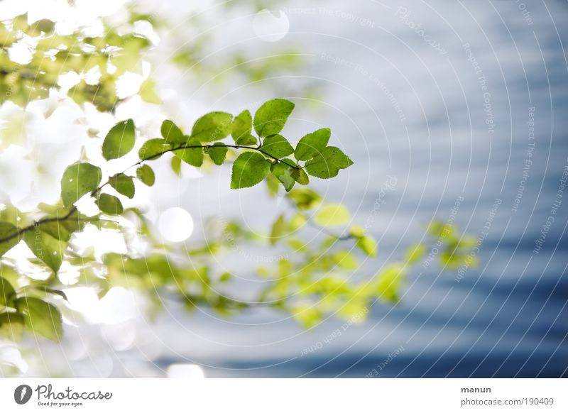 Nature Blue Green Summer Water Relaxation Leaf Calm Plant Spring Autumn Bright Glittering Design Contentment Fresh