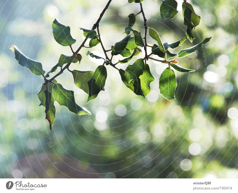 Nature Plant Green Beautiful Relaxation Calm Environment Life Natural Bright Glittering Esthetic Branch Beautiful weather Twig Environmental protection