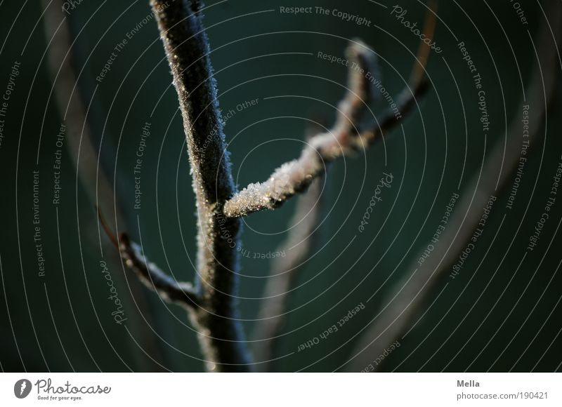 Tree goose skin Environment Nature Plant Winter Climate Climate change Ice Frost Branch Freeze Dark Cold Natural Calm Transience Branched Junction Colour photo