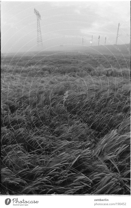 Summer Field Waves Fog Wind Environment Energy Energy industry Electricity Cable Grain Harvest Electricity pylon Cornfield Transmission lines Blow