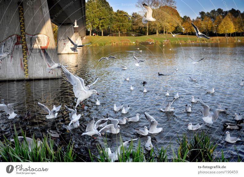 place there! Aviation Landscape Plant Animal Water Summer Autumn Beautiful weather River bank Lake Lakeside Wild animal Bird Seagull Feeding Duck Duck birds