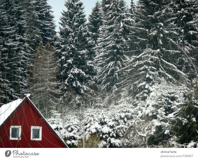 The red house at the next corner left Nature Landscape Winter Weather Beautiful weather Bad weather Ice Frost Snow Tree Foliage plant Wild plant Forest Alps