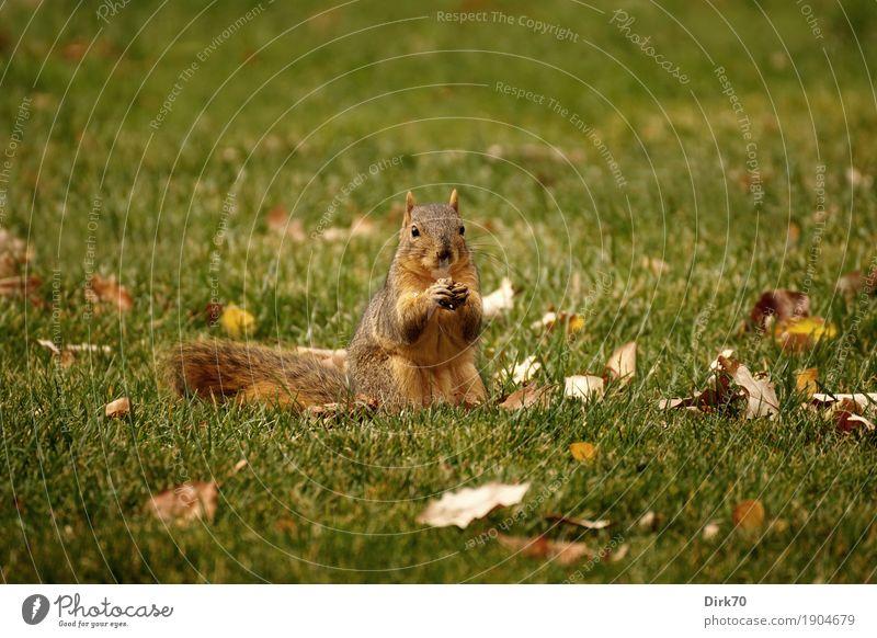 Nature Leaf Animal Eating Autumn Meadow Grass Small Garden Park Wild animal Sit USA Beautiful weather Cute Curiosity