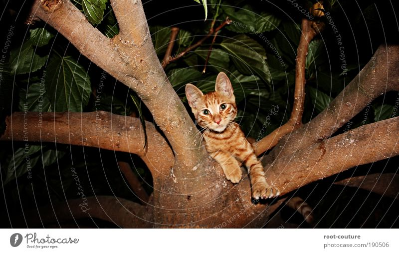 Cat Nature Beautiful Joy Animal Relaxation Cool (slang) Pelt Playing Hang Pet Paw Claw Romp Free-living Prowl